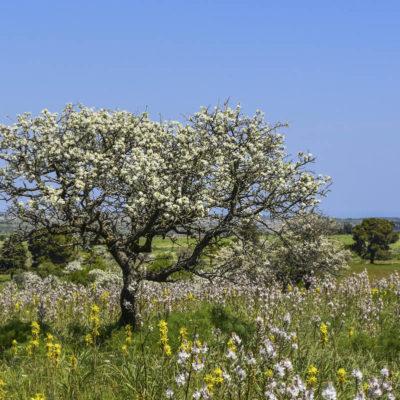 EY0TJT Parco Nazionale Dell alta Murgia, Ruva di Puglia, Apulia, Italy