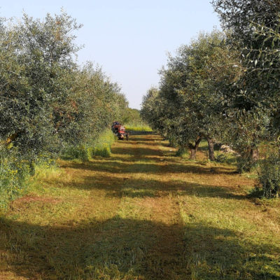 Gay Italian Accommodation Olive Grove